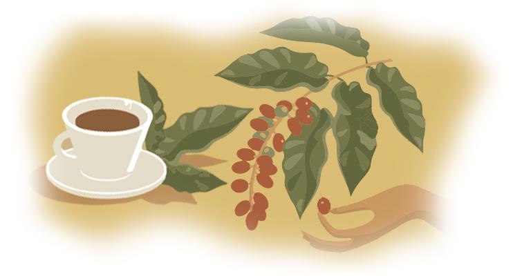 O Dia Em Que Tomar Um Café Deixou de Ser Apenas Degustar Uma Bebida –  Como a Visita à Fazenda Recanto Mudou o Conceito de Tomar Café