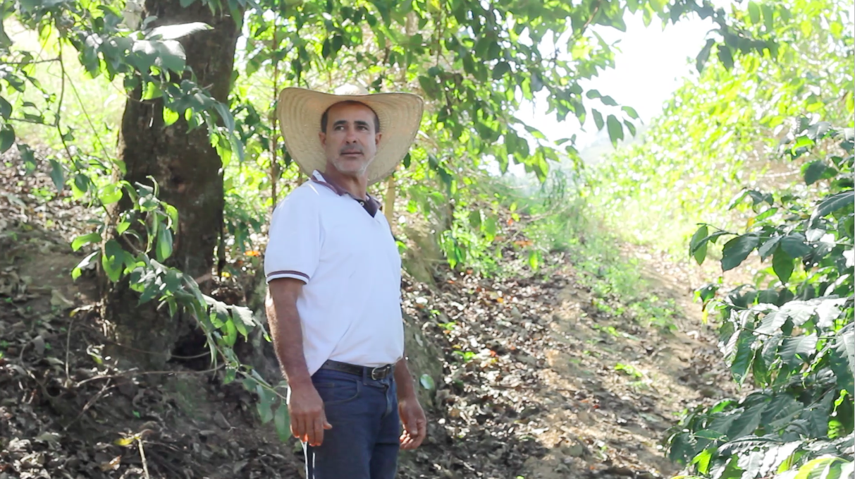 Produtor Donizeti, na lavoura sombreada da Fazenda Seixal