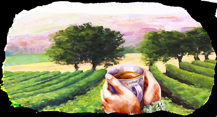 Turismo Vivencial por Todos os Processos do Café – A Complexa Cadeia dos Grãos: da Lavoura até Chegar na Xícara
