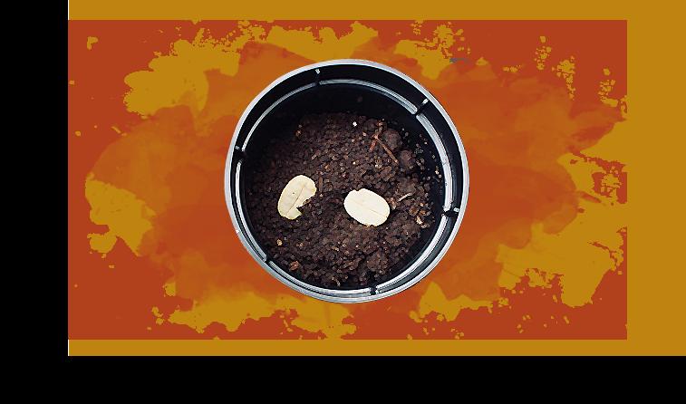 O Mimo dos Assinantes de Setembro de 2019 – Como Fazer a sua Muda de Café e os Cuidados com a Planta